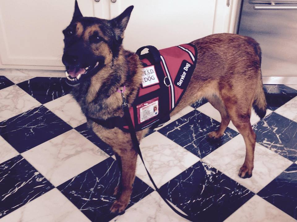 What Tasks Do Ptsd Service Dogs Do