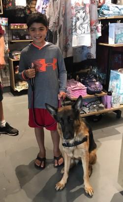 Service Dog Sales Training And Certification Ocala Florida